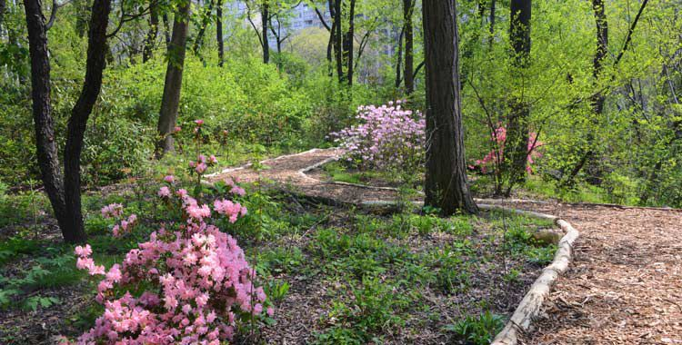 Hallett Nature Sanctuary is one of the most romantic places in Central Park